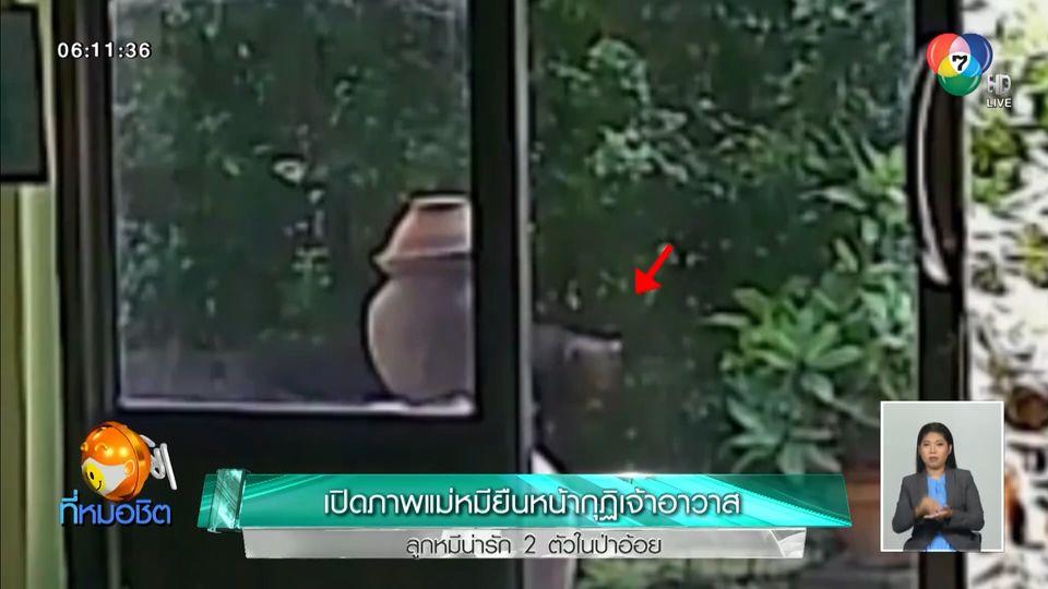 ข่าวเปิดภาพ แม่หมียืนหน้ากุฏิเจ้าอาวาส-ลูกหมีน่ารัก 2 ตัวในป่าอ้อย