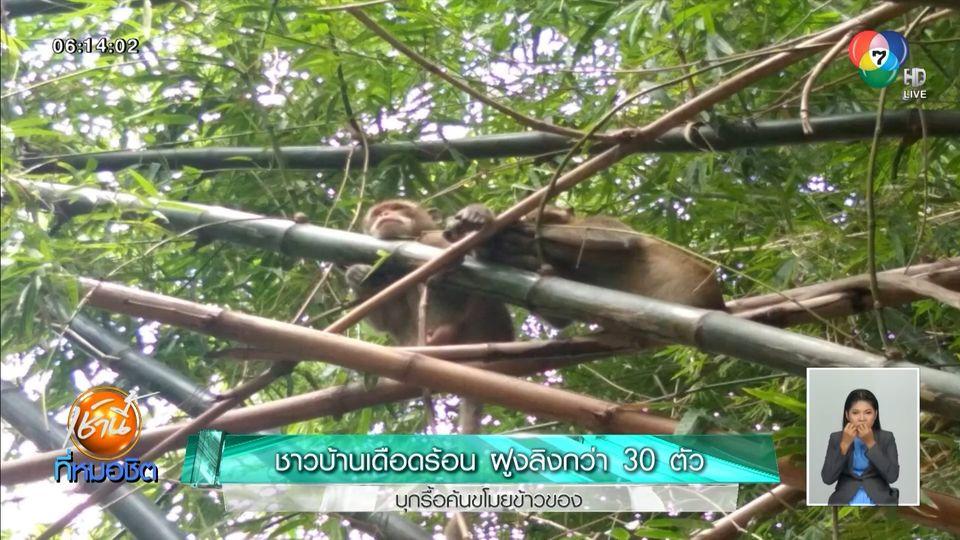 ชาวบ้านเดือดร้อน ฝูงลิงกว่า 30 ตัว บุกรื้อค้นขโมยข้าวของ