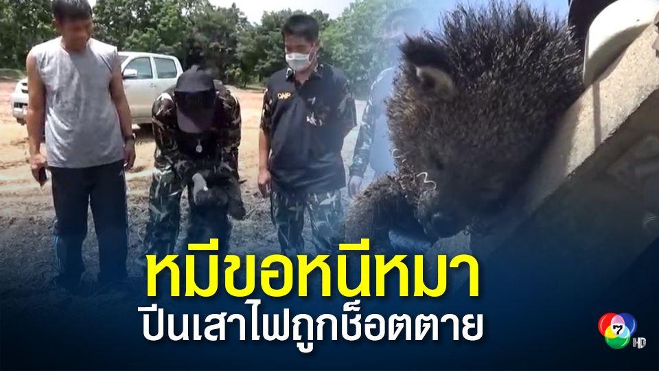 สลด!หมีขอหนีหมาวิ่งขึ้นเสาไฟฟ้าถูกช็อตตายคาที่