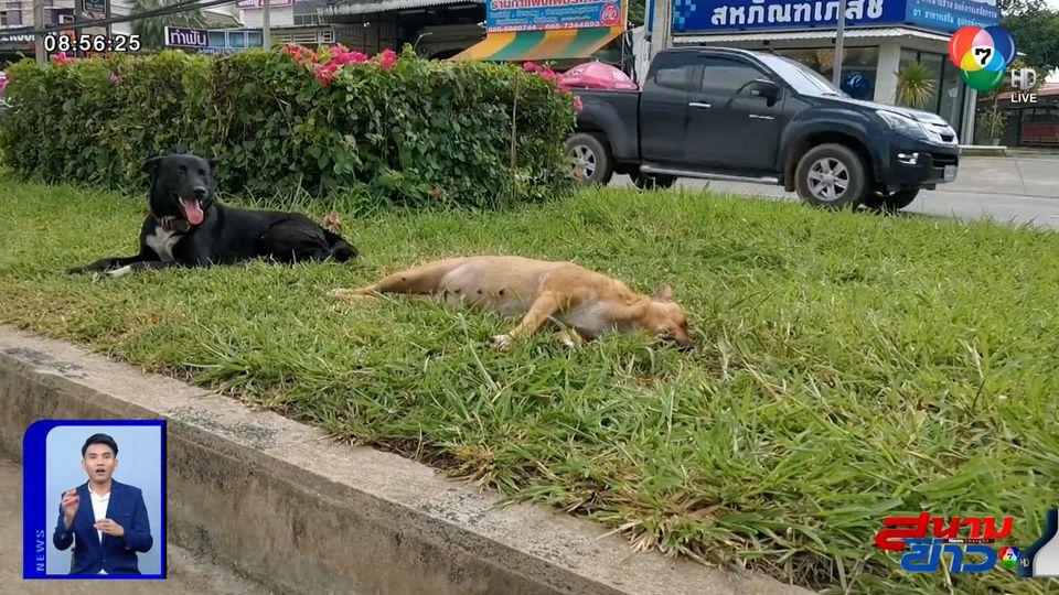 ภาพเป็นข่าว : เวทนา สุนัขตัวผู้นอนเฝ้าร่างตัวเมีย ถูกรถชนตาย