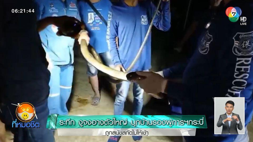 ระทึก งูจงอางตัวใหญ่ บุกบ้าน รองผู้การฯกระบี่ ถูกสุนัขสกัดไม่ให้เข้า