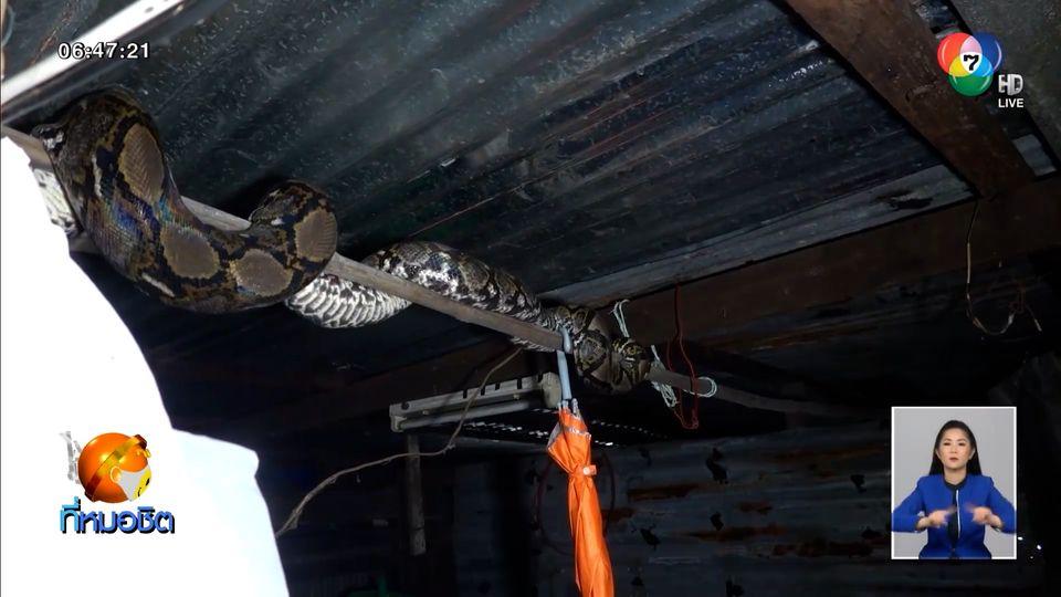 แทบช็อก งูเหลือมยักษ์ลำตัวยาวกว่า 4 เมตร โผล่ในห้องนอน