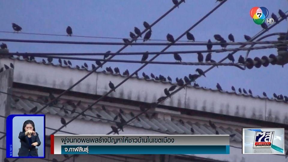 ฝูงนกอพยพสร้างปัญหาให้ชาวบ้านในเขตเมือง จ.กาฬสินธุ์