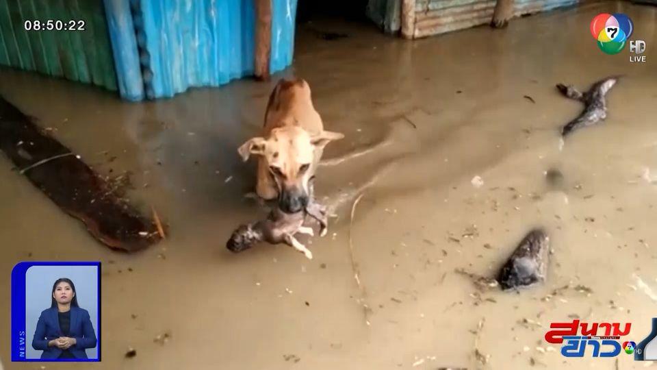 ภาพเป็นข่าว : ลูกใครใครก็รัก แม่สุนัขคาบลูกไว้ในปาก ฝ่าน้ำท่วมในอินเดีย