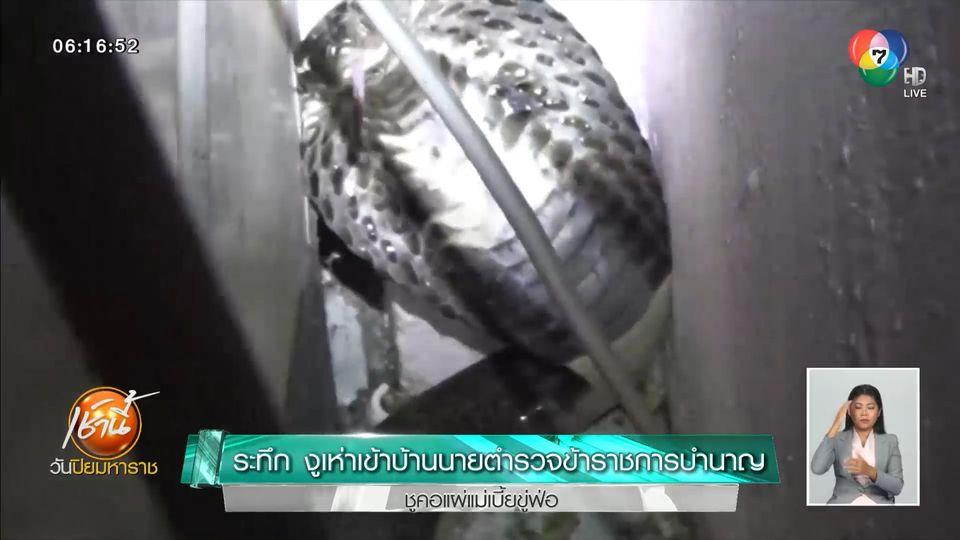 ระทึก งูเห่าเข้าบ้านนายตำรวจข้าราชการบำนาญ ชูคอแผ่แม่เบี้ยขู่ฟ่อ