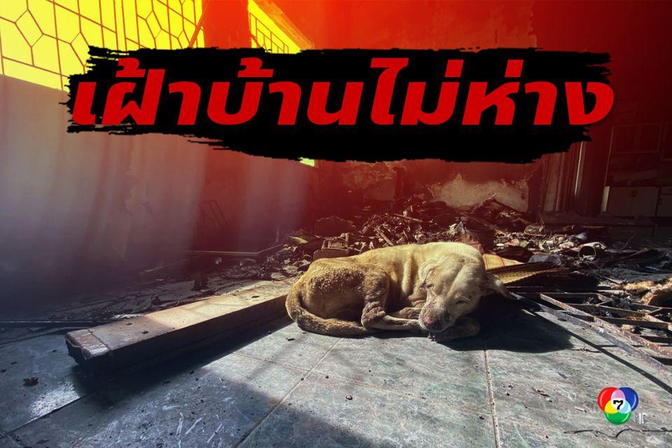 เจ้าหมอก สุนัขโดนไฟคลอก เหตุท่อก๊าซระเบิด เฝ้าบ้านไม่ห่าง