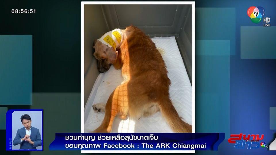 ภาพเป็นข่าว : ชวนคนรักน้องหมา-แมว ทำบุญกับมูลนิธิ ดิ อาร์ค ในพระราชูปถัมภ์