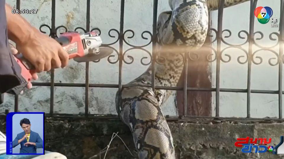 ภาพเป็นข่าว : กู้ภัยช่วยเหลือ เจ้างูเหลือมตัวใหญ่ ลำตัวติดคารั้วบ้าน