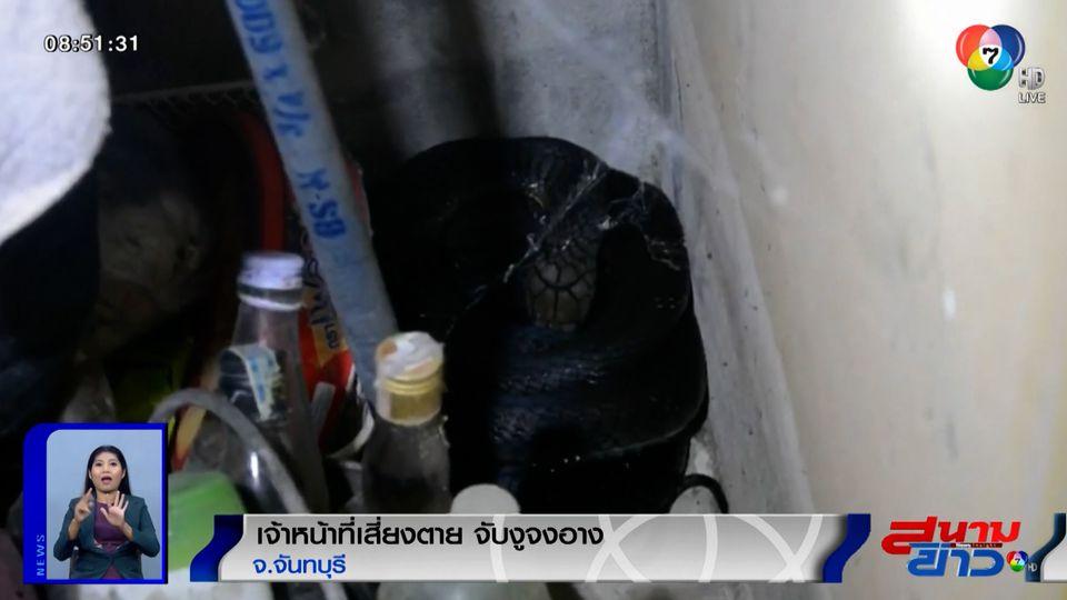 ภาพเป็นข่าว : เจ้าหน้าที่เสี่ยงตาย ใช้มือเปล่าจับงูจงอาง จ.จันทบุรี