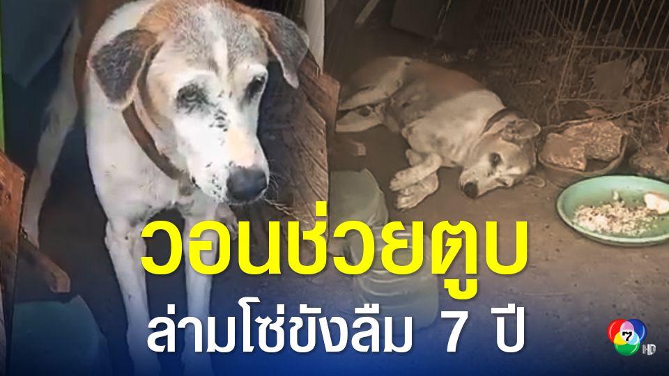 วอนช่วยสุนัขถูกเจ้าของจับล่ามโซ่อยู่กับที่นาน 7 ปี จนผอมโซ ตาอักเสบ