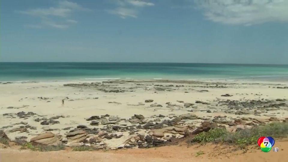 ระทึก! ฉลามกัดคนบริเวณชายหายเคเบิลในออสเตรเลีย