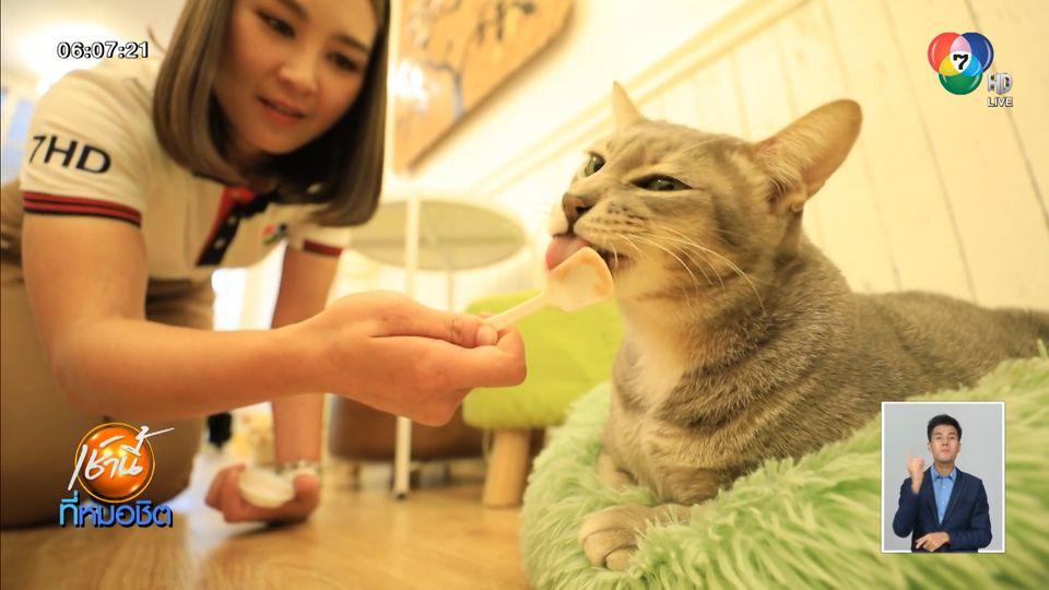 Mohu Mohu Cafe บ้านใหม่ของแมวจร เติมเต็มความสุขให้คนรักน้องเหมียว