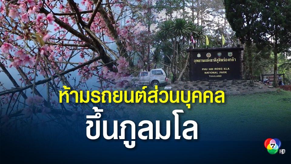 วางกฎห้ามรถยนต์ส่วนบุคคลขึ้นภูลมโล ชมดอกซากุระเมืองไทย