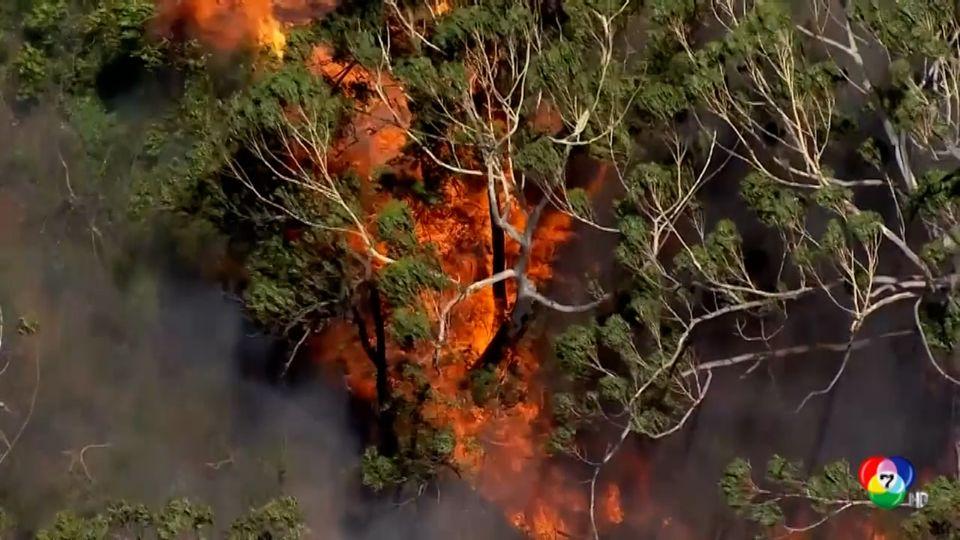 คลื่นความร้อนแผ่ปกคลุมออสเตรเลีย จนก่อให้เกิดไฟป่าหลายจุด
