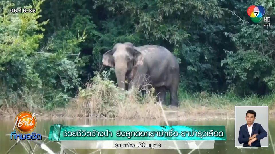 ช่วยชีวิตช้างป่า ยิงลูกดอกยาฆ่าเชื้อ-ยาบำรุงเลือด ระยะห่าง 30 เมตร