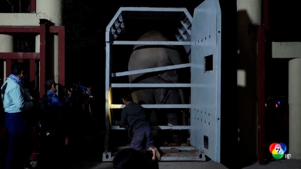 ช้างพลายคาวาน ช้างที่โดดเดี่ยวที่สุดในโลก เดินทางถึงกัมพูชาแล้ว