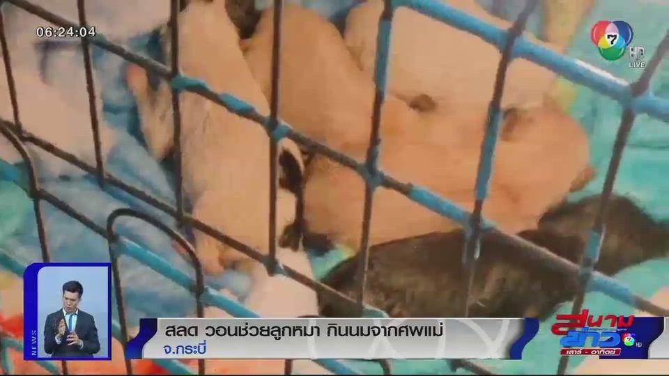 ภาพเป็นข่าว : สลด วอนช่วยลูกหมา กินนมจากศพแม่
