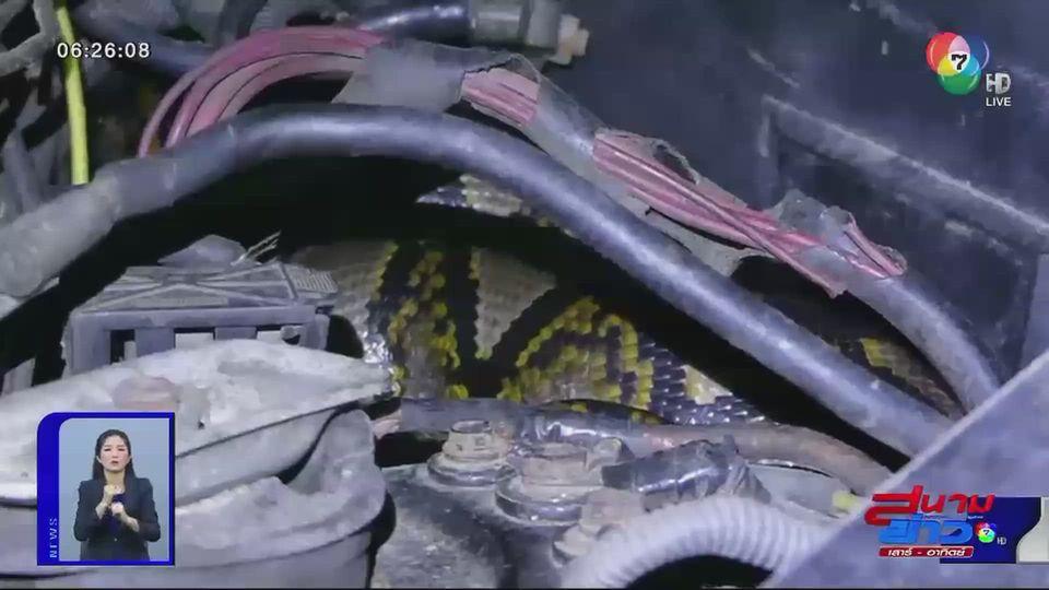 ภาพเป็นข่าว : งูเหลือมยักษ์ซุกห้องเครื่องรถยนต์