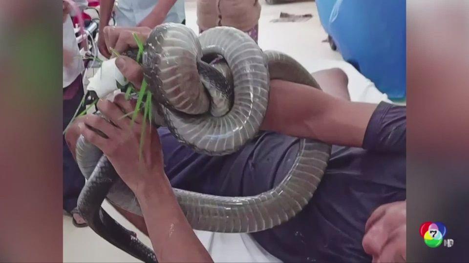 ชายเวียดนามใจเด็ด! แบกงูจงอางยาว 3.5 เมตร เข้าโรงพยาบาลหลังถูกกัด