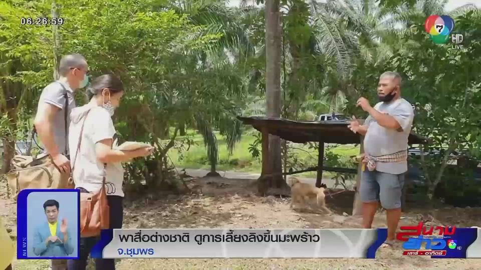 ภาพเป็นข่าว : พาสื่อต่างชาติ ดูการเลี้ยงลิงขึ้นมะพร้าว