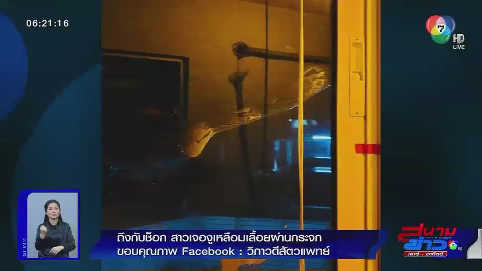 ภาพเป็นข่าว : ถึงกับช็อก สาวเจองูเหลือมเลื้อยผ่านกระจก