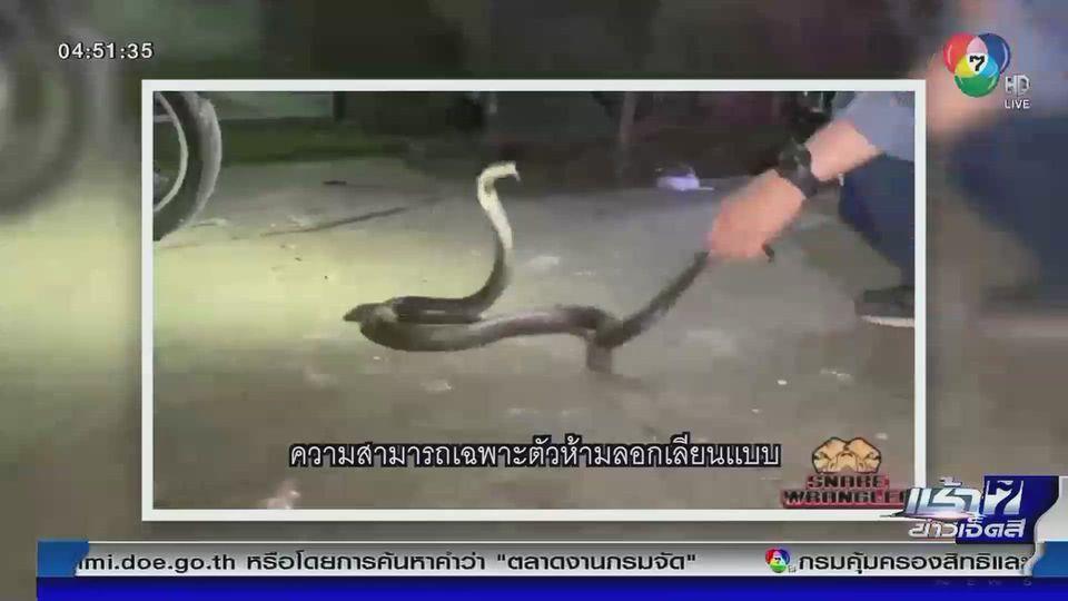 Green Report : เตือนภัย ฤดูฝนระวังงูซุกในบ้าน