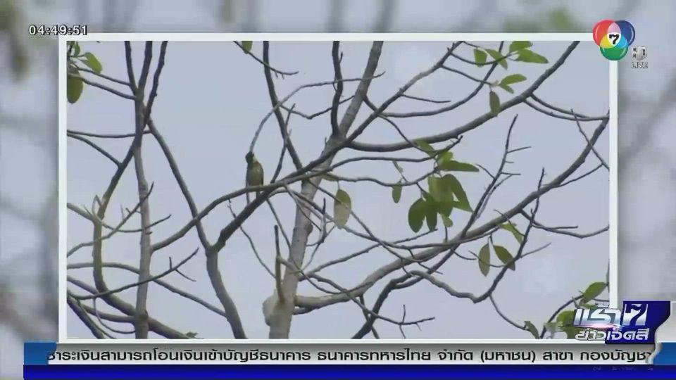 Green Report : นกหายากในเมือง