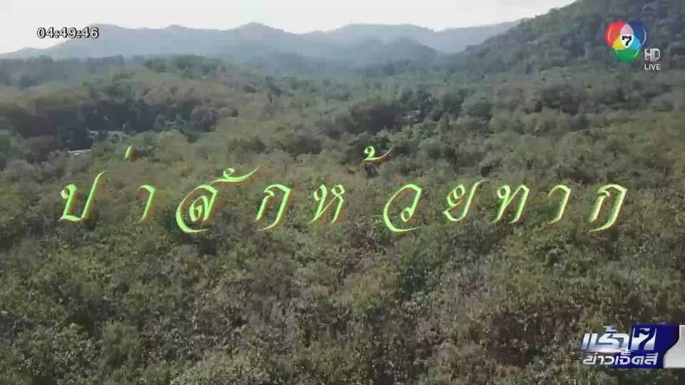 Green Report : ต้นสักสายพันธุ์ดีของโลก