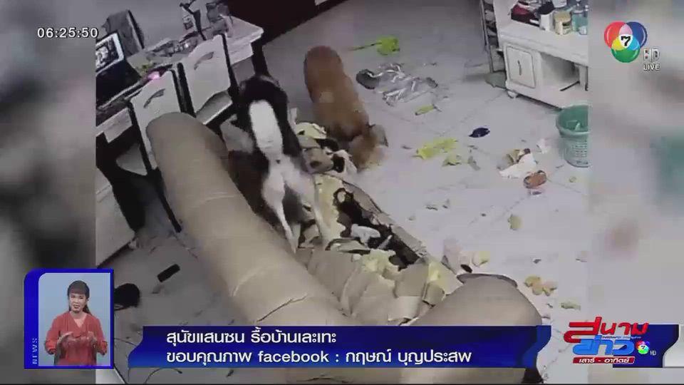 ภาพเป็นข่าว : สุนัขแสนซน รื้อบ้านเละเทะ
