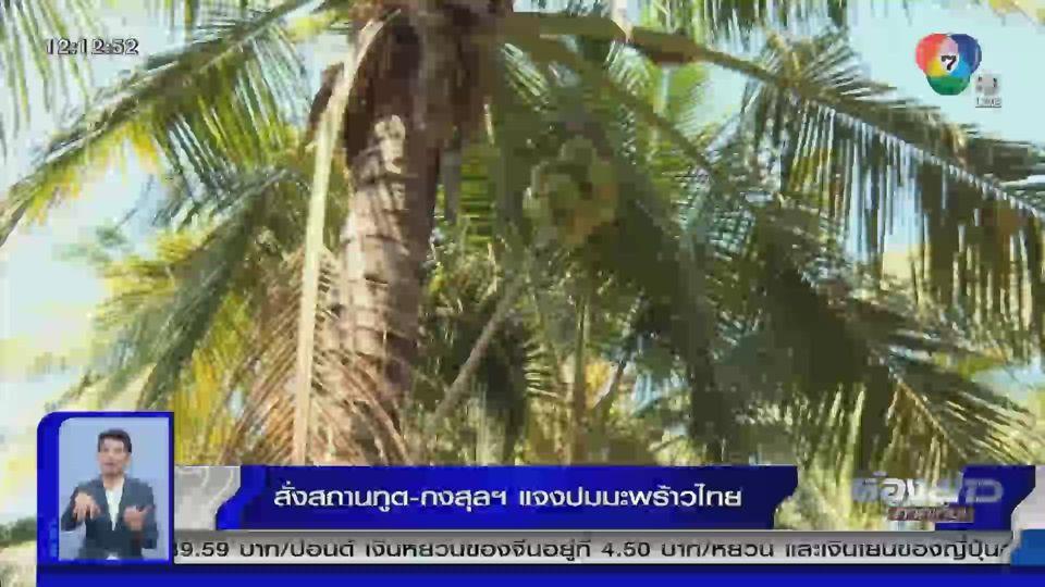 สั่งสถานทูต-กงสุลฯ แจงปมลิงเก็บมะพร้าว ย้ำให้ความสำคัญดูแลสวัสดิภาพของสัตว์