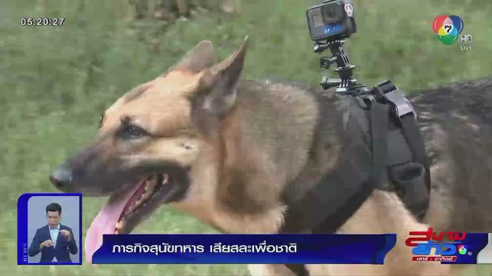 รายงานพิเศษ : ภารกิจสุนัขทหาร เสียสละเพื่อชาติ