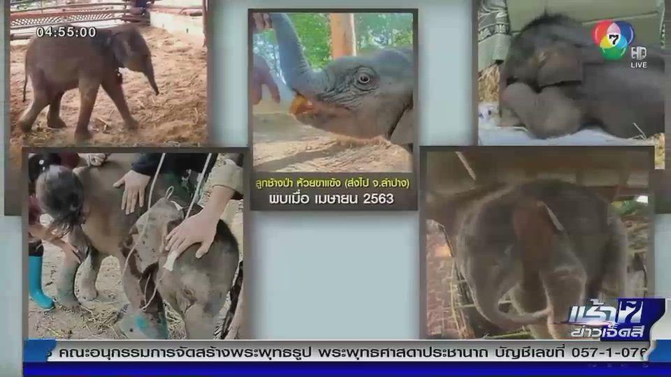 Green Report : สาเหตุลูกช้างป่าหลงโขลงบ่อย