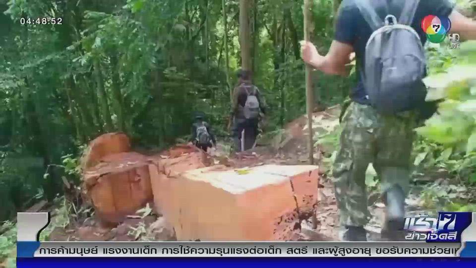 Green Report : ช่องโหว่กระบวนการส่งไม้ออกจากป่า จ.นราธิวาส