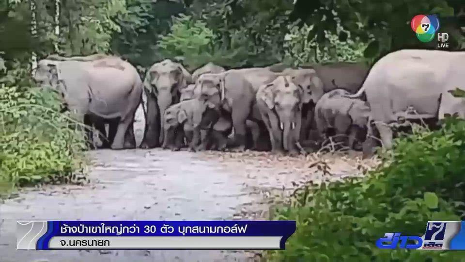 ช้างป่าเขาใหญ่กว่า 30 ตัว บุกสนามกอล์ฟ