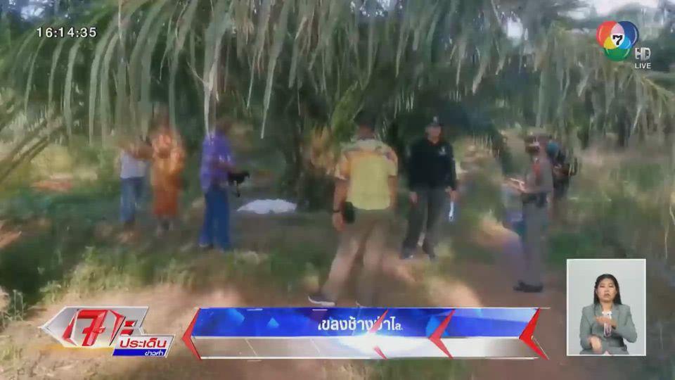โขลงช้างป่าไล่ทำร้ายพระภิกษุมรณภาพ ขณะออกบิณฑบาต จ.ชลบุรี
