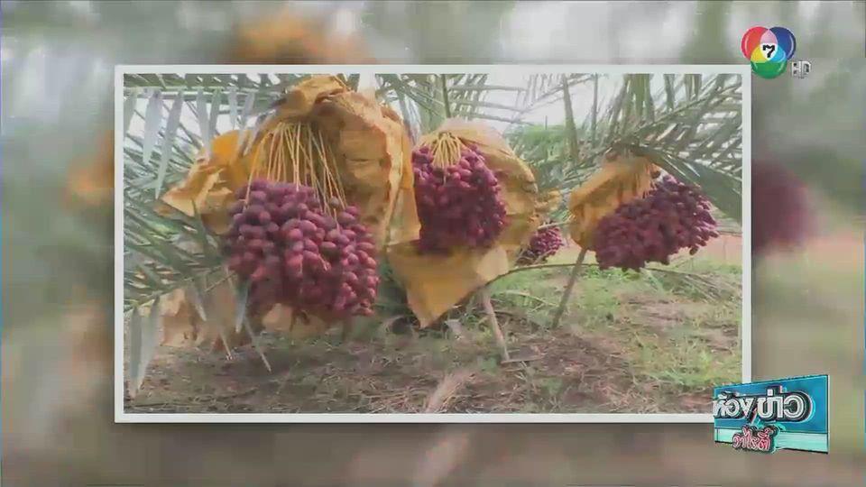 ข่าวเกษตร : ส่องสวนอินทผลัม ปลูกขายแทนข้าว จ.หนองบัวลำภู
