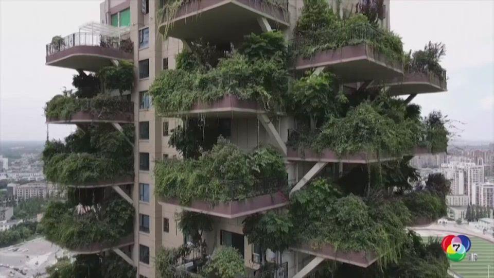 โครงการป่าแนวตั้งบนอะพาร์ตเมนต์ในจีนร้าง เหตุเป็นแหล่งเพาะพันธุ์ยุง