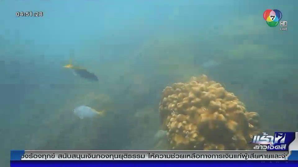 Green Report : ซากอวนทำลายปะการัง เกาะพะงัน