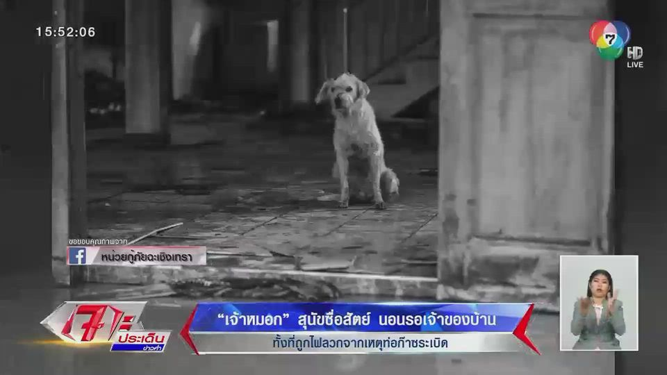 เจ้าหมอก สุนัขซื่อสัตย์ นอนรอเจ้าของบ้าน ทั้งที่ถูกไฟลวก จากเหตุท่อก๊าซระเบิด
