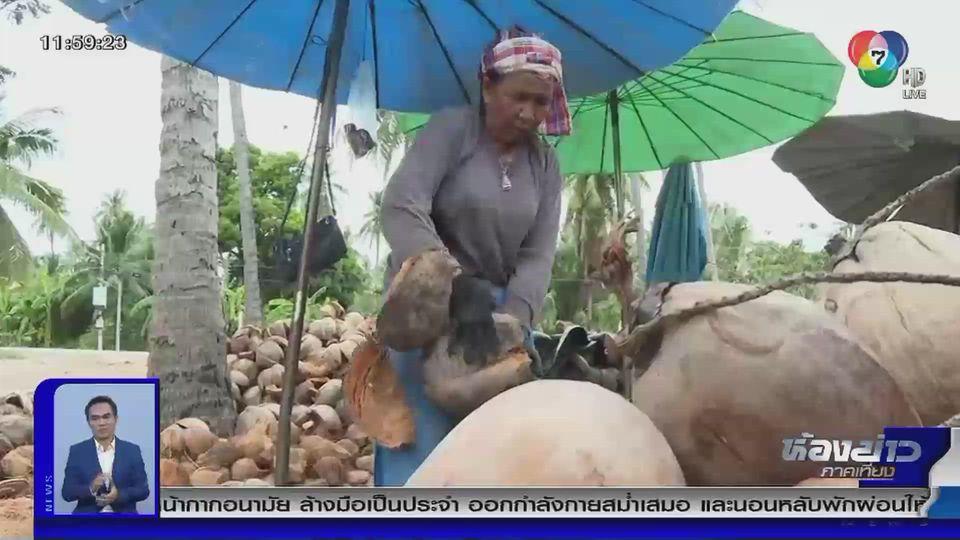 รายงานพิเศษ : แบนกะทิไทยกระทบชาวสวนมะพร้าว
