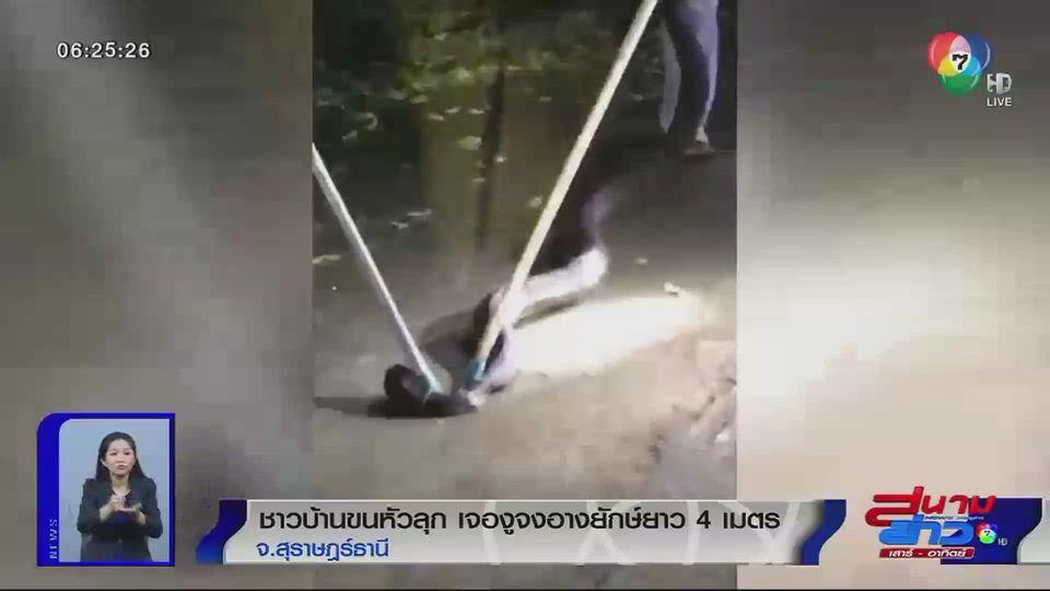 ภาพเป็นข่าว : ชาวบ้านขนหัวลุก เจองูจงอางยักษ์ยาว 4 เมตร