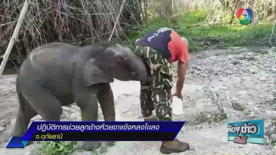 รายงานพิเศษ : ปฏิบัติการช่วยลูกช้างห้วยขาแข้งหลงโขลง