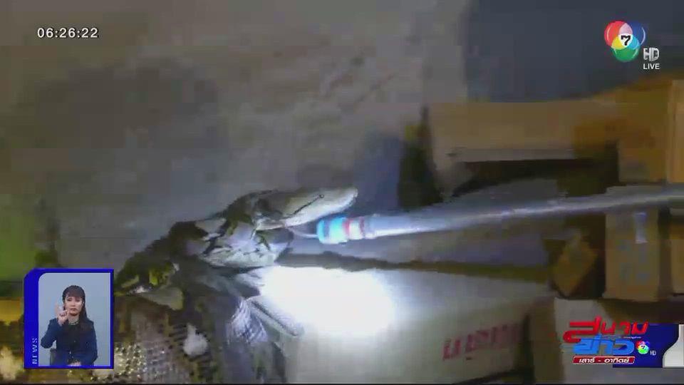 ภาพเป็นข่าว : งูหลามเขมือบลูกสุนัขพุงกาง
