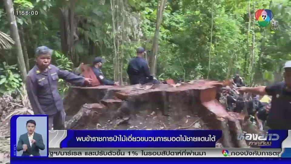รายงานพิเศษ : พบข้าราชการป่าไม้เอี่ยวขบวนการมอดไม้ชายแดนใต้