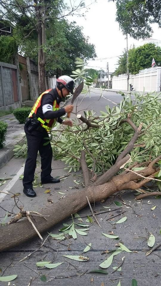 ต้นไม้ล้ม รามคำแหง 40