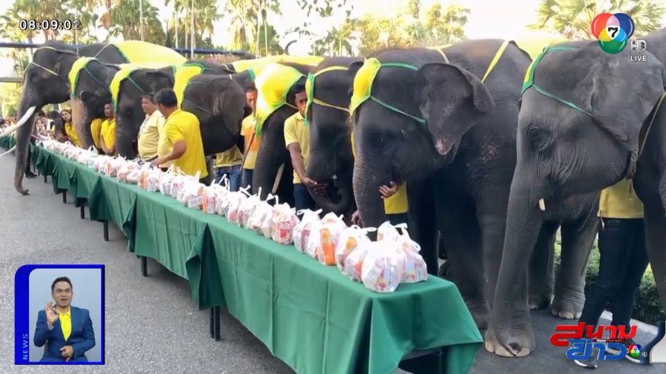 ภาพเป็นข่าว : สวนนงนุช นำช้างแสนรู้ 9 เชือก ร่วมตักบาตรพระสงฆ์ เนื่องในวันพ่อแห่งชาติ