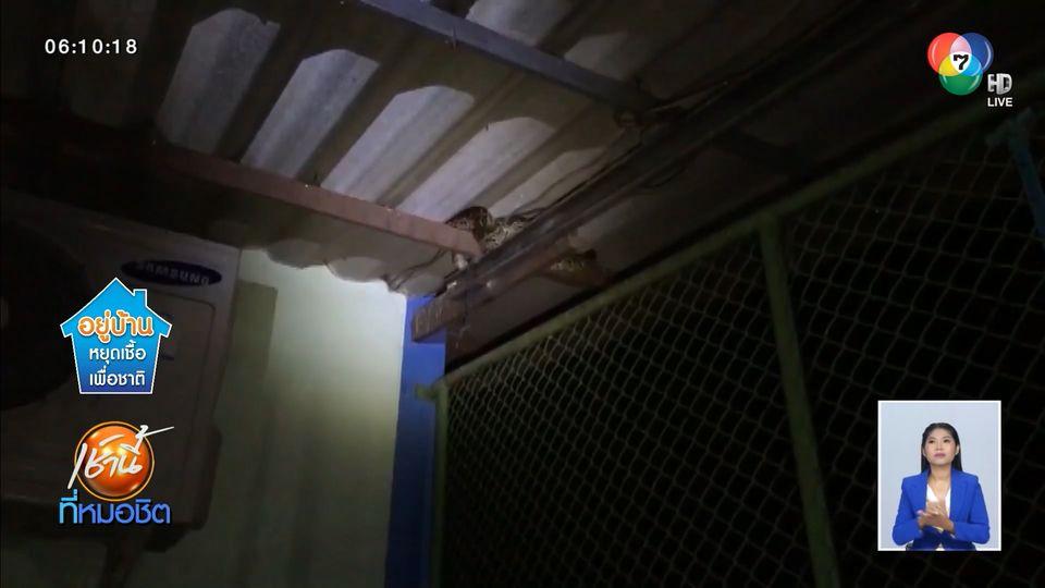 ยกนิ้วให้! กู้ภัยหญิงใจเด็ด จับงูเหลือมตัวใหญ่ 2 ตัว เลื้อยหนีน้ำซุกใต้หลังคาบ้าน
