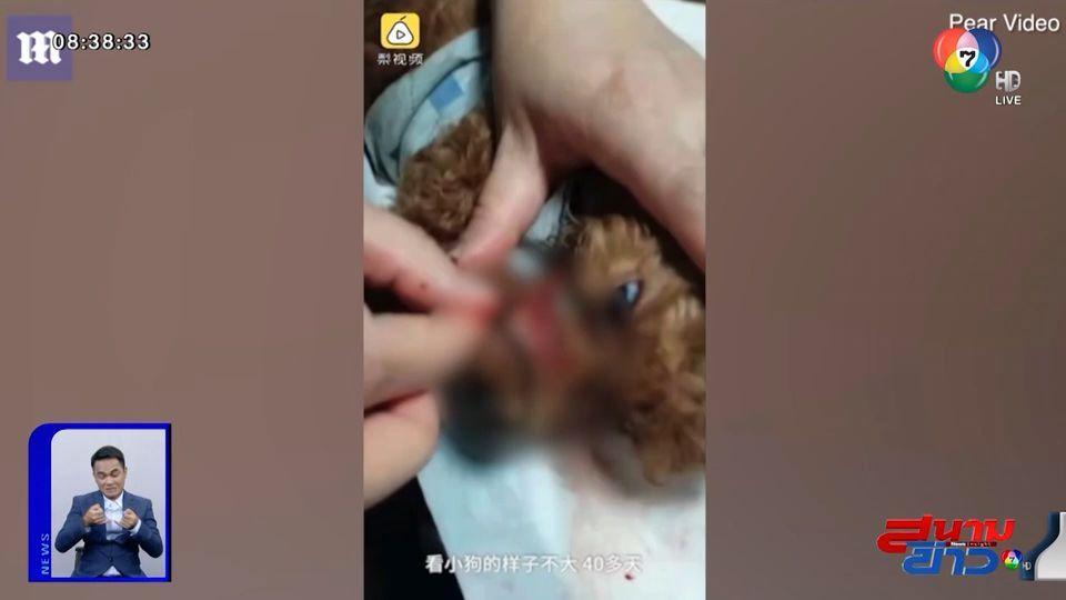 ภาพเป็นข่าว : น่าเวทนา ลูกสุนัขถูกหนังยางมัดปาก ปล่อยทิ้งให้ตายข้างถนน