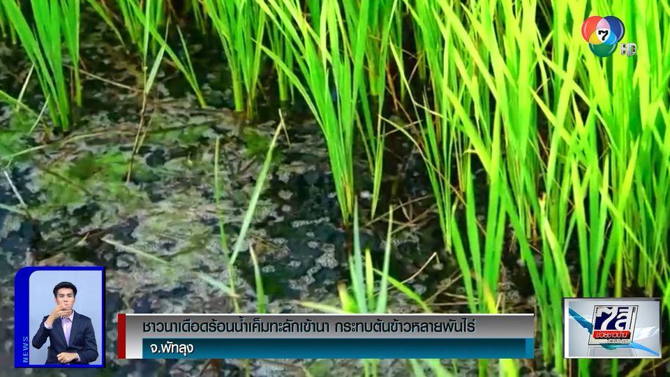 ชาวนาเดือดร้อนน้ำเค็มทะลักเข้านา กระทบต้นข้าวหลายพันไร่ จ.พัทลุง