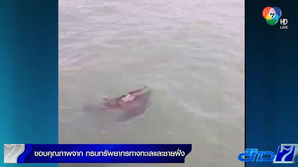 ช่วยโลมาปากขวดพลัดหลงฝูง ต้อนออกทะเลอ่าวไทย